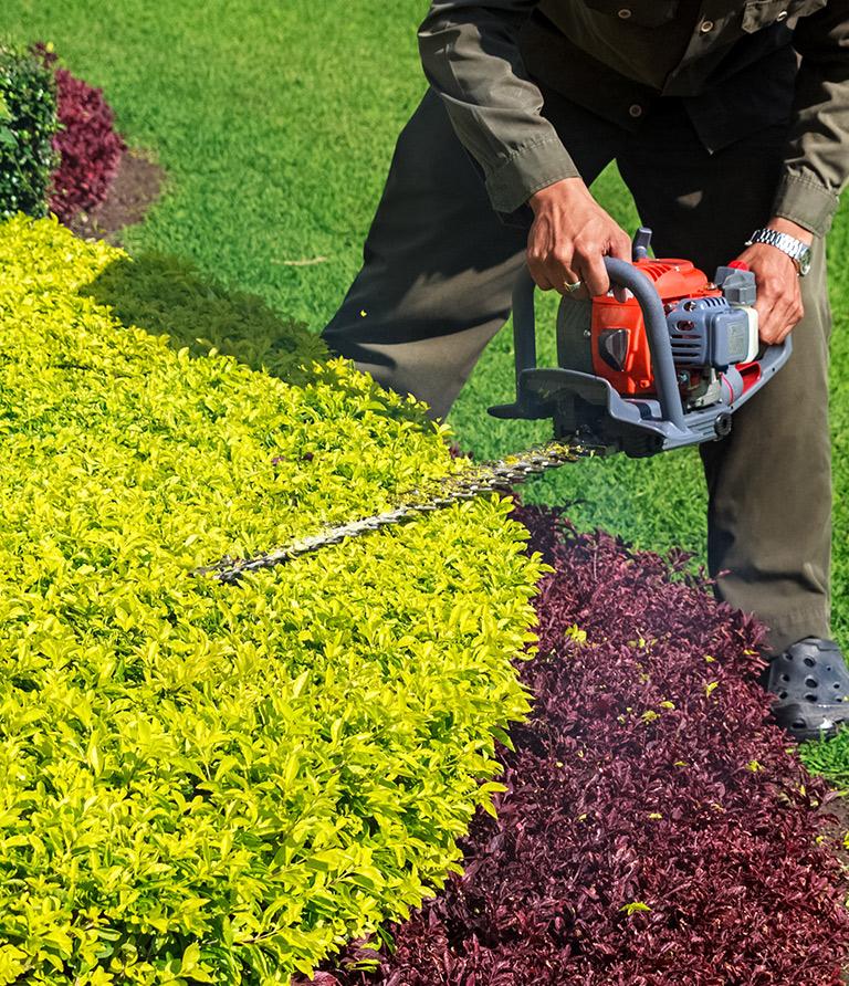 Bei der Gartenarbeit wird ein Busch zurückgeschnitten.