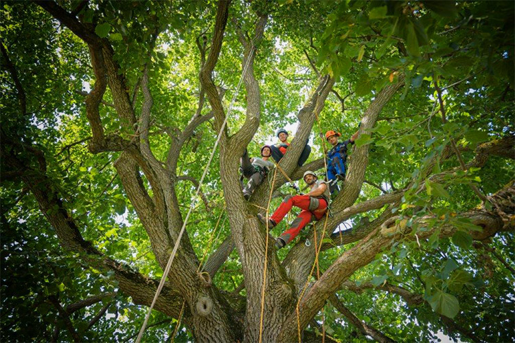 Ein starkes Team im Baum